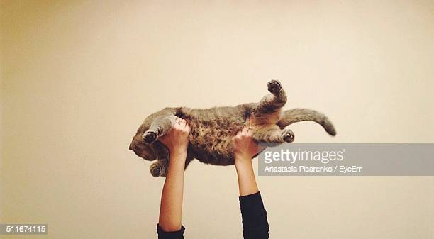 woman lifting up cat - hairy women stock pictures, royalty-free photos & images
