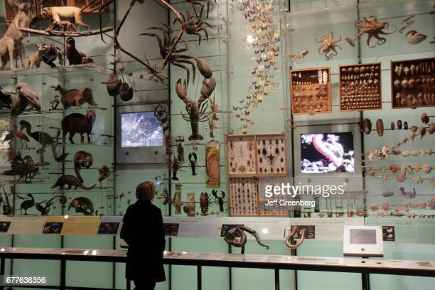 A woman looking at a species exhibit at the American Museum of Natural History