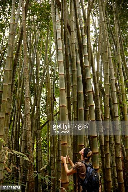 816 The Big Bamboo Photos And Premium High Res Pictures Getty Images