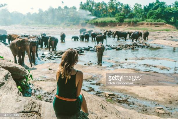 Woman looking at Elephants bathing in Pinnavella