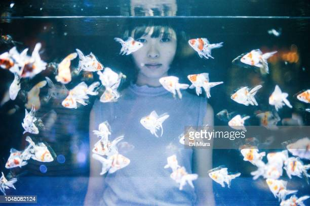 woman looking at goldfishes swimming in aquarium - fish love stock pictures, royalty-free photos & images