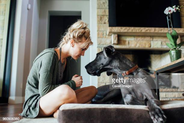 woman looking at great dane while sitting at home - great dane stock pictures, royalty-free photos & images