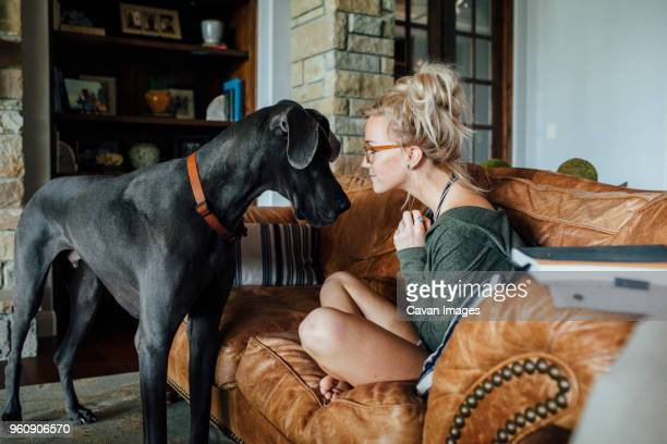 woman looking at great dane while sitting on sofa - great dane stock pictures, royalty-free photos & images