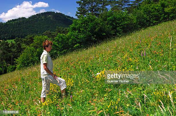 woman looking at plants on a round tour on the orchid natur trail erlingsbach, switzerland - natur photos et images de collection