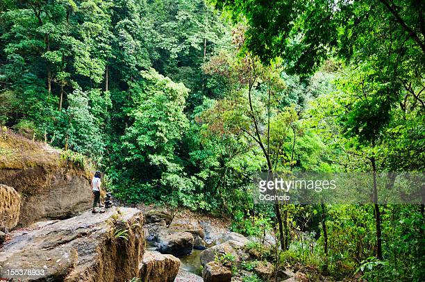 Woman looking at rainforest