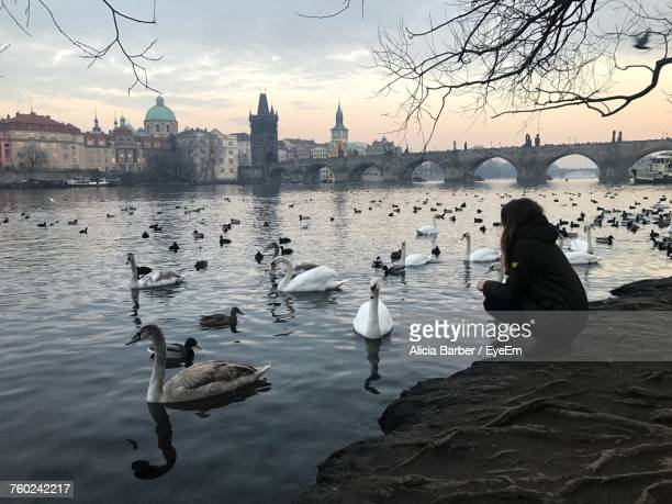Woman Looking At Swans Swimming In Vltava River Against Charles Bridge