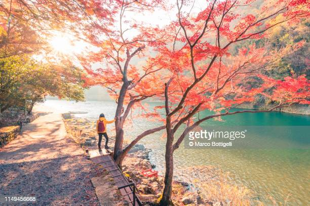 woman looking at view along a river in autumn, japan - japanese maple stock pictures, royalty-free photos & images