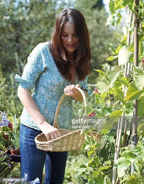 Woman looking down at basket of home grown vegetables