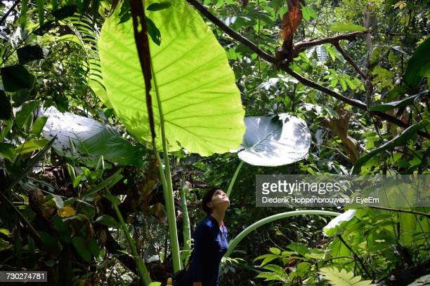 woman looking up while standing in forest - taman negara national park stock photos and pictures