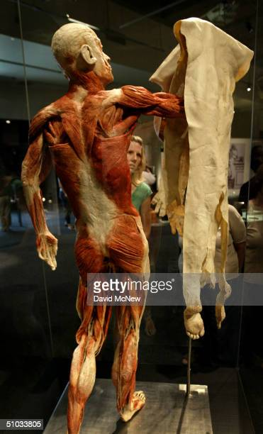Body Worlds Displays Cadavers As Art Stock Photos And Pictures
