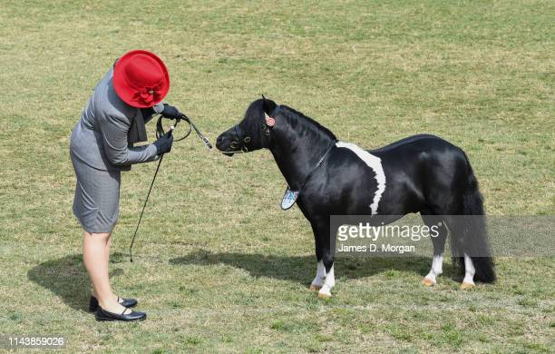 Woman looks at a minature horse awaiting judging during the Sydney Royal Easter Show at Sydney Showground on April 20, 2019 in Sydney, Australia. The...