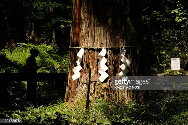 TOPSHOT A woman looks at a sacred tree at Takino Shrine in Nikko Tochigi prefecture on August 23 2018 Tiphaine Veron has been missing since July 29...