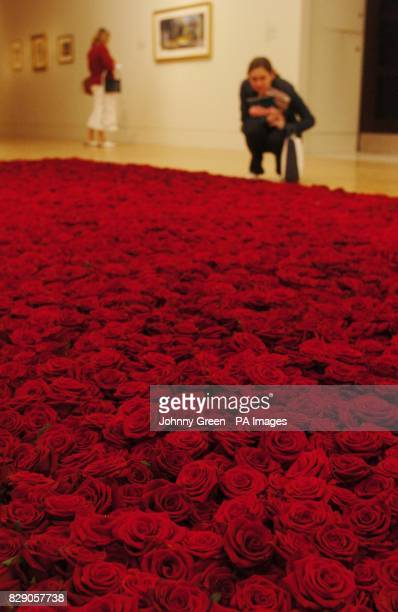 A woman looks at artist Anya Gallacio's 'Red on Green' consisting of 10000 english tea roses in which the heads are laid on a bed of thorns at the...