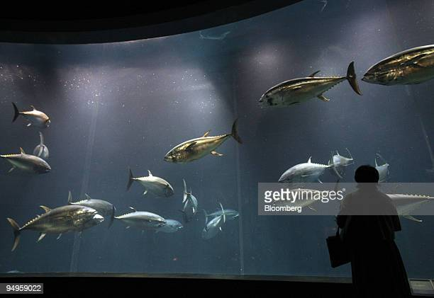 A woman looks at bluefin tuna swiming in a fish tank at the Tokyo Sea Life Park in Tokyo Japan on Friday May 29 2009 The aquarium is located on the...
