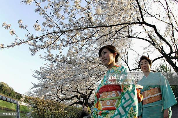 A woman looks at cherry blossoms at one of Tokyo's beauty spots on April 9 2005 in Tokyo Japan Cherry blossom blooms at the end of March in Japan and...