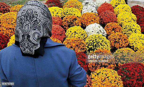 A woman looks at Chrysanthemums in the market for All Saint's Day on October 30 2009 at Bratislava's main cemetery Slavicie Udolie The flower is...