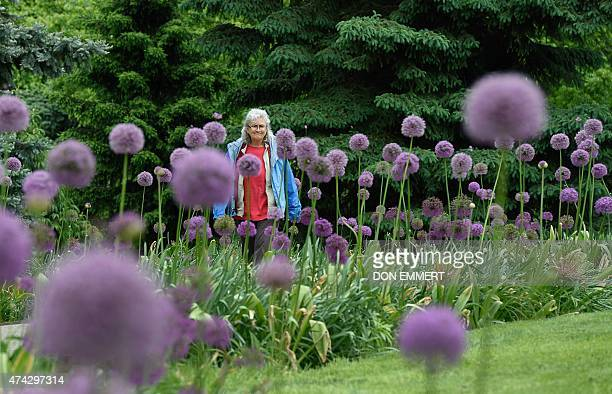 A woman looks at purple Alliums in the Bronx Botanical Gardens in New York on May 21 2015 AFP PHOTO/DON EMMERT