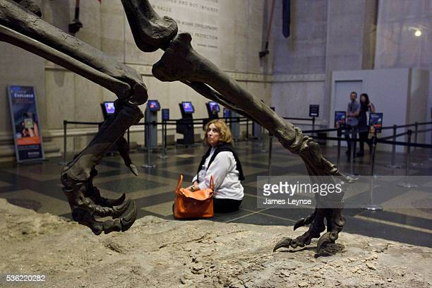 A woman looks at the skeleton of an Allosaurus dinosaur at the American Museum of Natural History After renovations the museum reopened today its...
