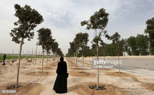 TOPSHOT A woman looks at trees planted at the Supreme Committee for Delivery and Legacy Tree Nursery in Doha on February 22 2018 The nursery is...