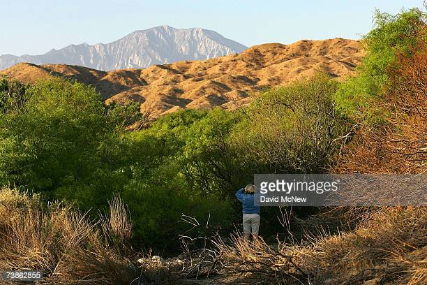 A woman looks for birds among new green growth at a honey mesquite grove as recovery from a 2005 wildfire continues at Big Morongo Wildlife Preserve...