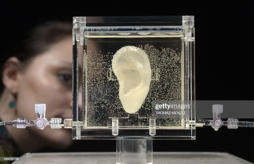 A woman looks on the living replica of Dutch painter Vincent van Gogh's famously severed ear which is displayed at Culture and media museum ZKM, in Karlsruhe, southwestern Germany, on June 4, 2014. The ear is part of the exhibition 'Sugababe' by Diemut Strebe, an artist specialised in artworks using biological material, who collaborated with scientists to reconstruct the Dutch master's ear using DNA from a relative and 3D printers. The show will be on display in Karlsruhe until July 6, 2014 before moving to New York in early 2015. CAPTION