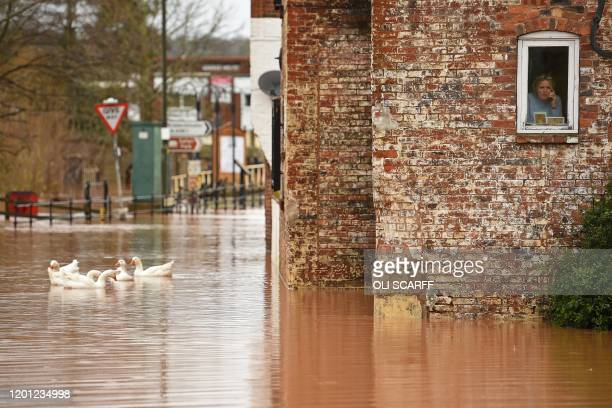 Woman looks out of her window as geese swim past in floodwater after the River Severn bursts it's banks in Bewdley, west of Birmingham on February 16...