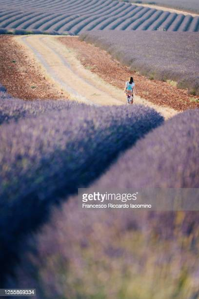 woman lost in the fields of valensole plateau, lavender flowers at sunset . provence, southern france. - francesco riccardo iacomino france foto e immagini stock
