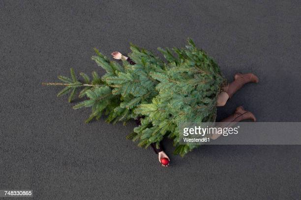 woman lying buried under christmas tree - mord stock-fotos und bilder