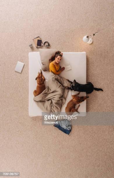 woman lying in bed with her dogs, reading a book - lit ameublement photos et images de collection