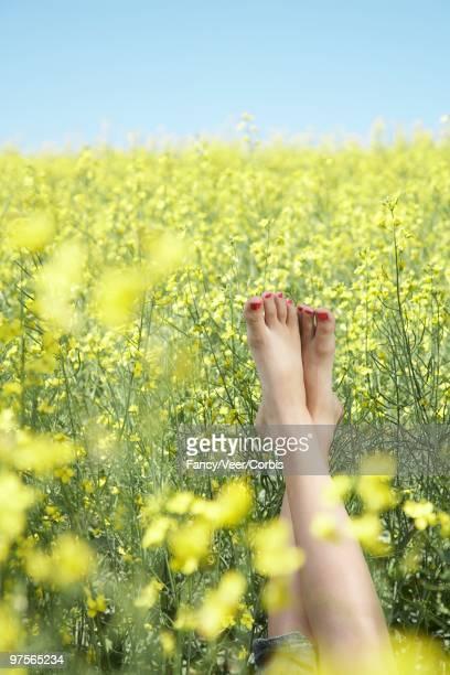 woman lying in field of canola - beaux pieds et femme photos et images de collection