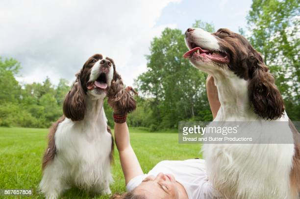 Woman Lying on her Back on the Grass Reaching for her Two English Springer Spaniel Dogs
