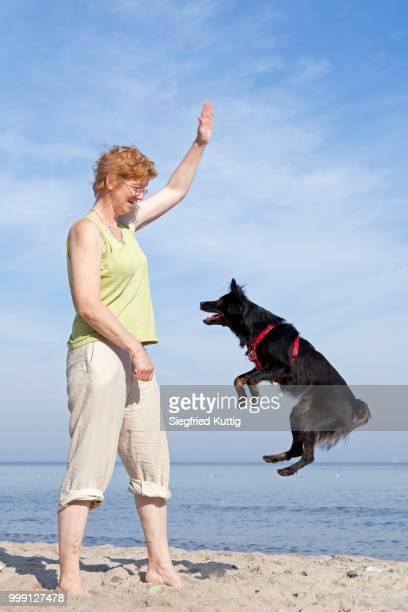 Woman making dog jump on the beach, Kuehlungsborn, Mecklenburg-Western Pomerania, Germany