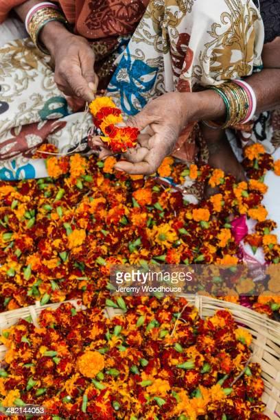 Woman making marigold garlands, New Delhi, Delhi, India