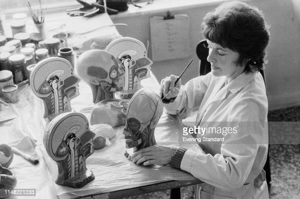 A woman manufacturing median section of human heads at The Skeleton Factory of Educational and Scientific Plastics Ltd in Redhill Surrey UK 16th...