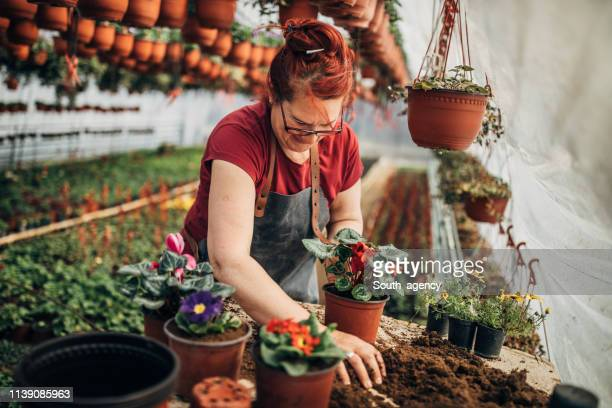 woman nursing flowers - arranging stock pictures, royalty-free photos & images