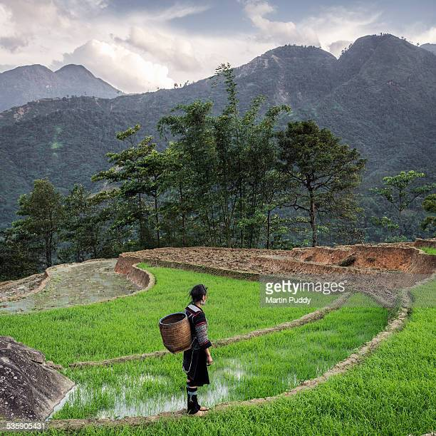 woman of black hmong hilltribe in rice paddy - sapa stock pictures, royalty-free photos & images