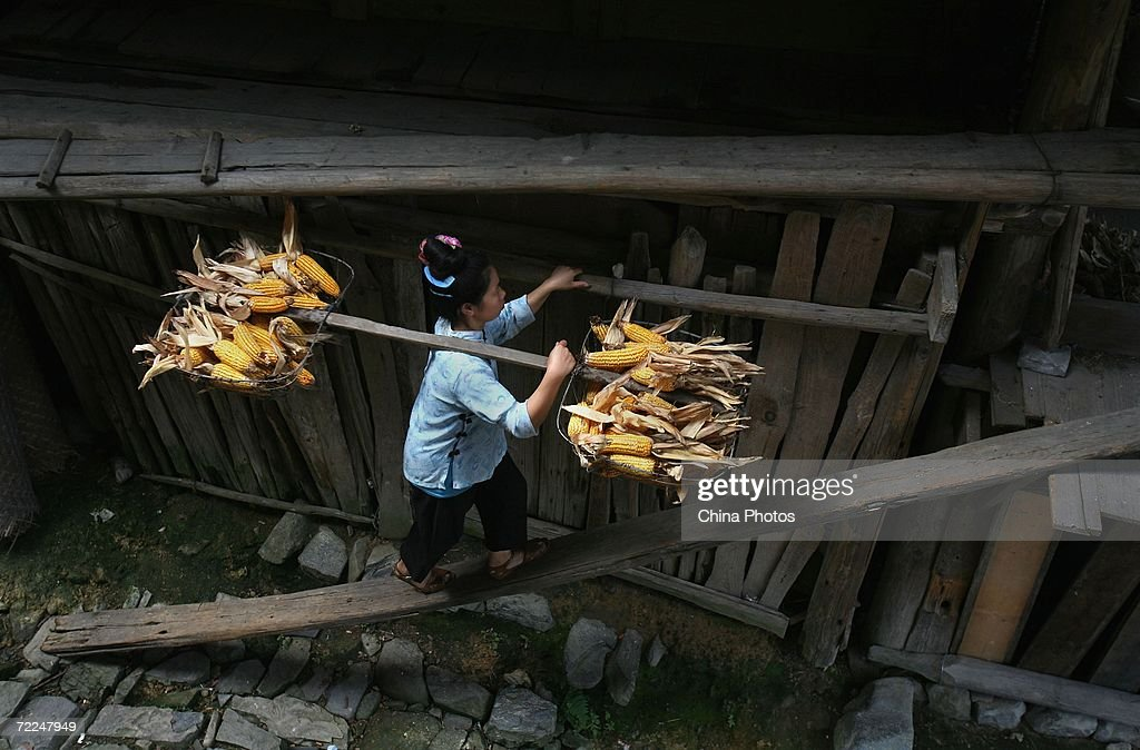 A woman of Miao ethnic origin carrying corns goes upstairs at Langdeshang Village on October 21, 2006 in Leishan County of Qiandongnan Miao and Dong Autonomous Prefecture, Guizhou Province, China. With a population of 8,940,116, the Miao people is one of the largest ethnic minorities in southwest China. Qiandongnan Prefecture is a multi-ethnic region where over 20 ethnic minority groups reside. Miao and Dong minorities make up over 70 percent of its population.