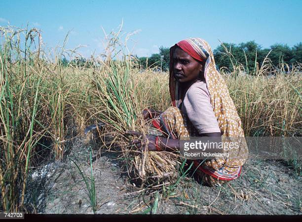 A woman of the Harijan caste sits October 28 1991 in India The Harijan caste is the lowest in the Hindu class hierarchy and its members are often...