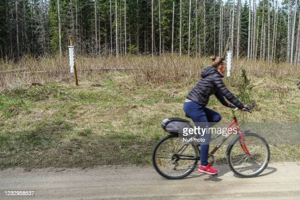 Woman on a bike cycling in front of the insect / bug traps is seen in Bialowieza National Park, Poland on 29 April 2021