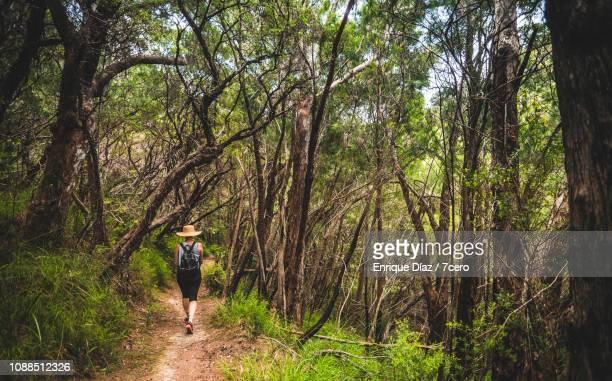 Woman on a bushwalk, Binna Burra, Queensland