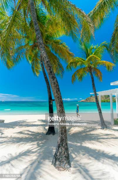 woman on a palm-fringed beach, antilles - paisajes de republica dominicana fotografías e imágenes de stock