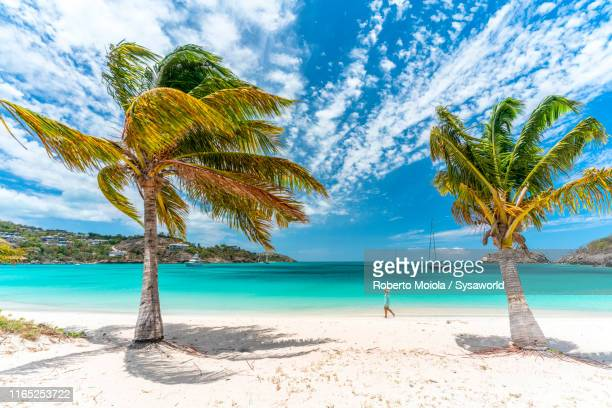 woman on a palm-fringed beach, caribbean - isla de antigua fotografías e imágenes de stock