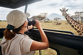 A woman on an African safari travels by car with an open roof and watching wild giraffes and antelope
