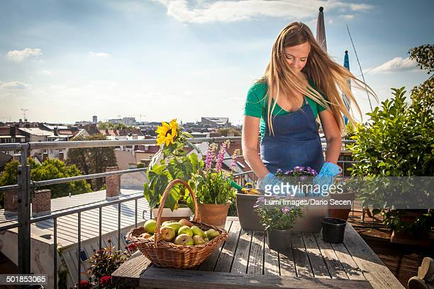 Woman On Balcony Planting Up Flower Box, Munich, Bavaria, Germany, Europe