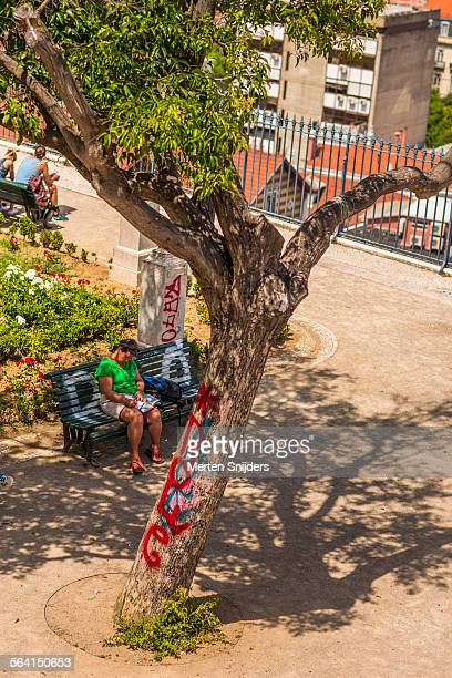 woman on bench below vandalized tree - merten snijders 個照片及圖片檔