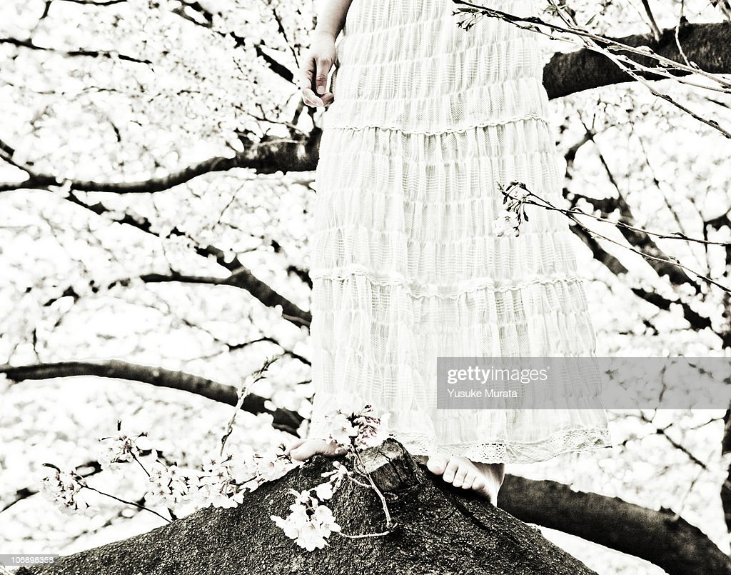 Woman on cherry tree : Stock Photo
