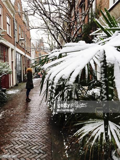 woman on city street in winter - bortes foto e immagini stock