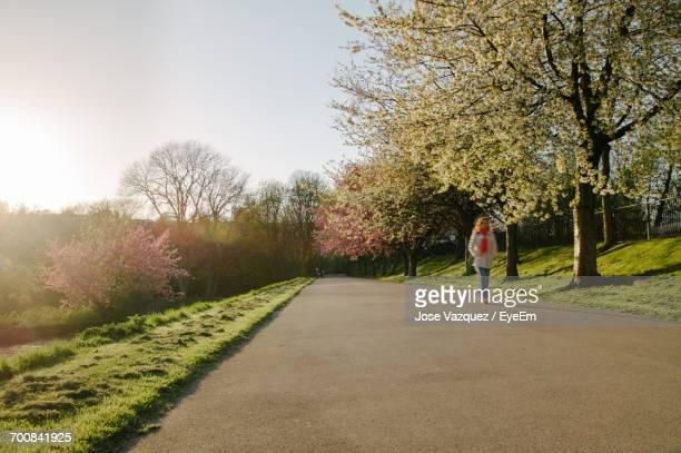 woman on road amidst trees against sky - sheffield stock pictures, royalty-free photos & images