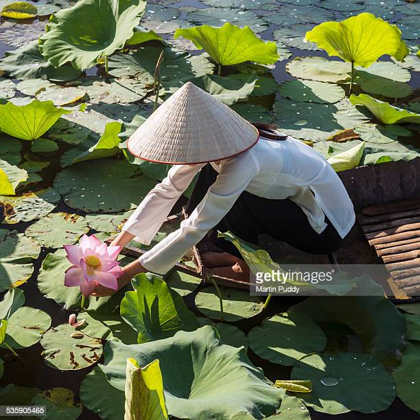 woman on small boat, picking water lilies - pretty vietnamese women stock pictures, royalty-free photos & images