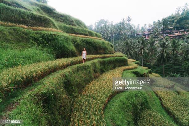 woman on tegallalang rice field on bali, indonesia - tegallalang stock photos and pictures